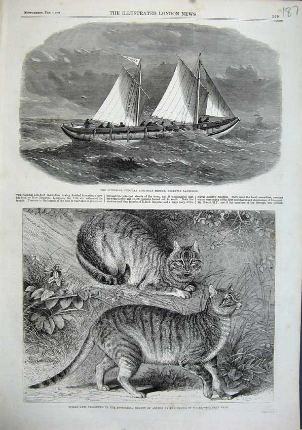 Print 1863 Liverpool Tubular Life-Boat Syrian Cats Zoological 187N115 Old Original