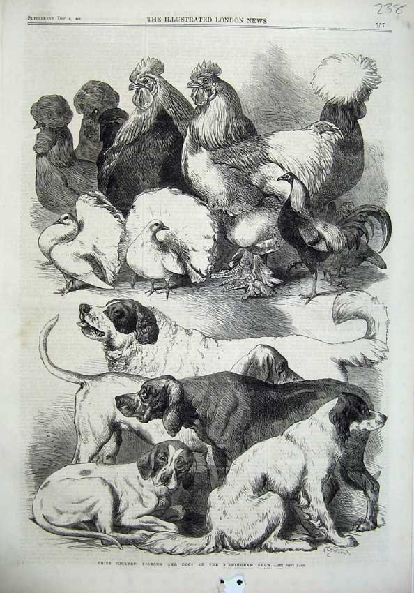 [Print Prize Poultry Pigeons Dogs Brimingham Show 1866 Animals 238N122 Old Original]