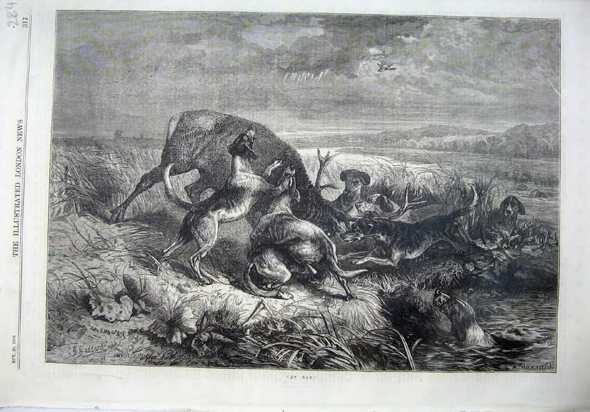 [Print Fine Art 1870 Wild Dogs Attacking Deer Stag Country 284N129 Old Original]