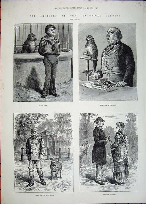 [Print 1881 Zoological Gardens Seal Birds Sheep Dogs Parrot 115N150 Old Original]