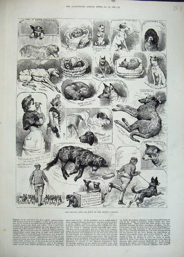 [Print 1883 Kennel Club Dog Show Crystal Palace Puppies 283N153 Old Original]