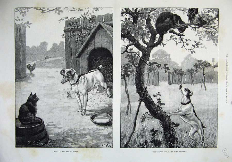 [Print 1887 Fine Art Animals Dogs Cats Tree Country Kennal Hen 209N161 Old Original]