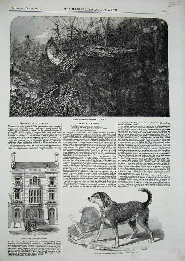 [Print Warminster Athenaeum Dog Fire-Man 1857 Pheasant Shoot 342N716 Old Original]