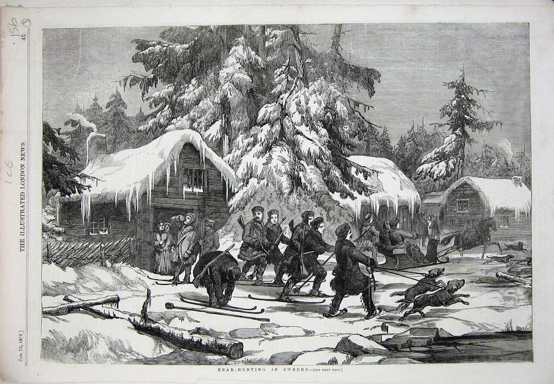 [Print Bear Hunting Sweden Sport 1856 Snow Skis Dogs Animals 156N734 Old Original]