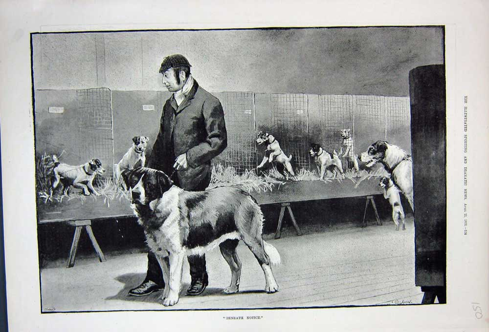 [Print 1891 Man Puppy Dogs St Bernard Pets Fine Art 150N743 Old Original]