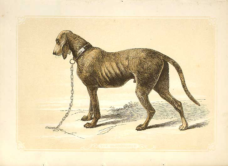 [Print The Blood Hound 1860 Coloured Engraving Sepia Style Dog 024482 Old Original]