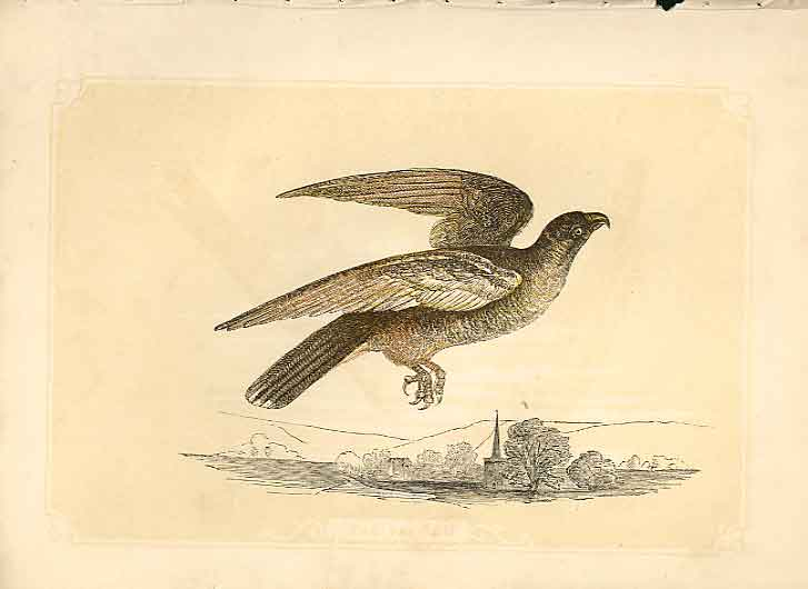 [Print The Falcon 1860 Coloured Engraving Sepia Style Bird Ha 444821 Old Original]