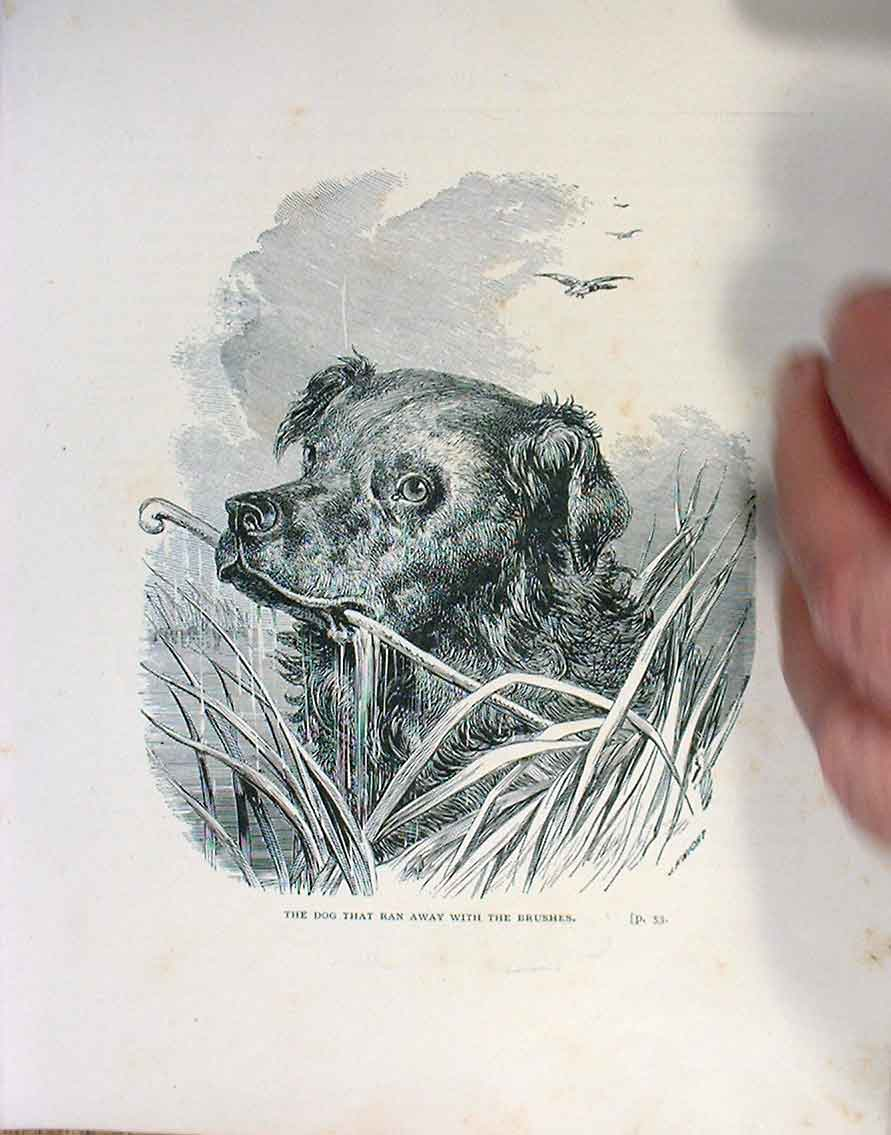[Print Don �T Beat Me S Dogs C1880 056525 Old Original]