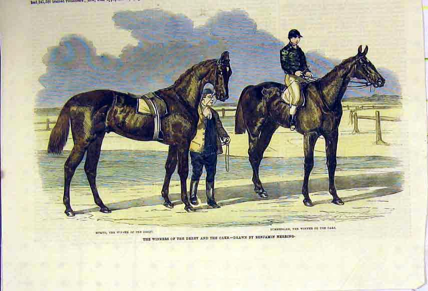 Print Horses Winner Derby Oaks Race Musjid Summerside C1850 105B306 Old Original