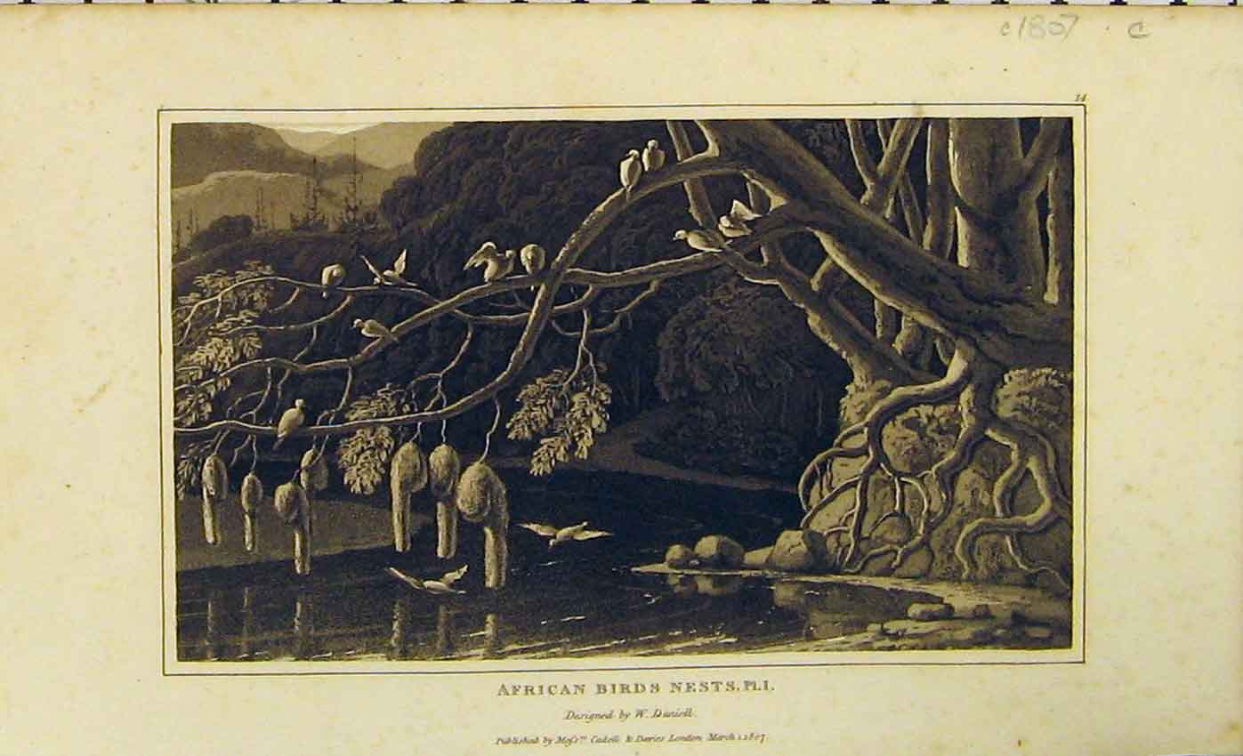 Print 1807 American Birds Nests Trees River Natural History 428B312 Old Original