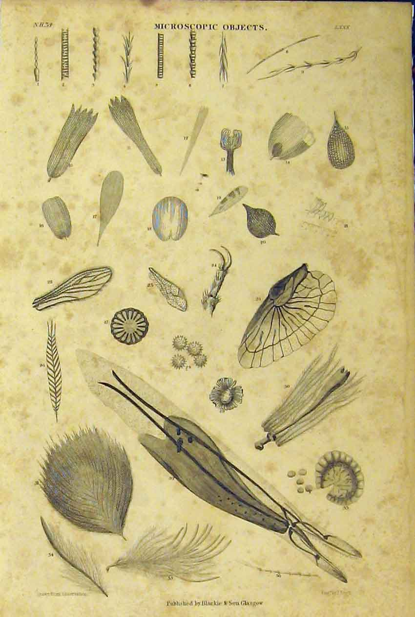 Print C1860 Microscopic Objects Animated Nature 220B319 Old Original