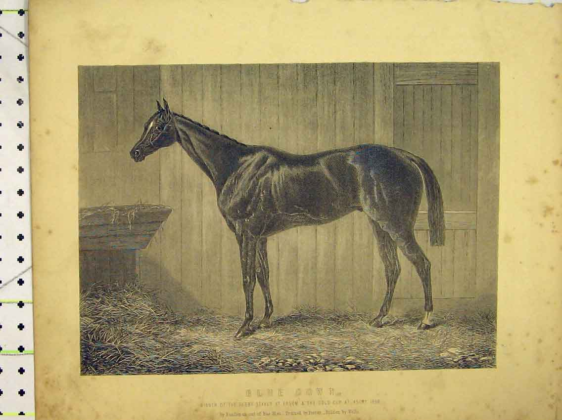 Print C1840 Horse Blue Gown Winner Epsom Derby Stakes Ascot 229B323 Old Original