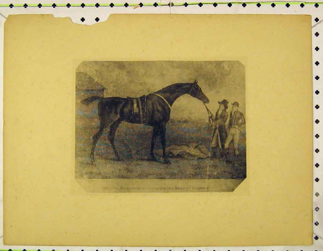 Print C1845 Race Horse Dragon Duke Bedford 120B324 Old Original