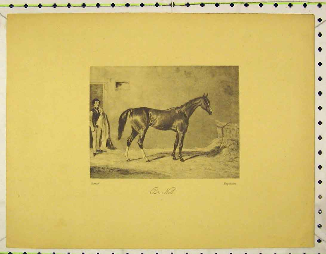 Print C1845 Beautiful Horse Our Nell Stable 124B324 Old Original
