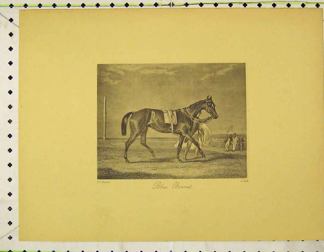 Print C1845 Race Horse Blue Bonnet Course Cook 131B324 Old Original