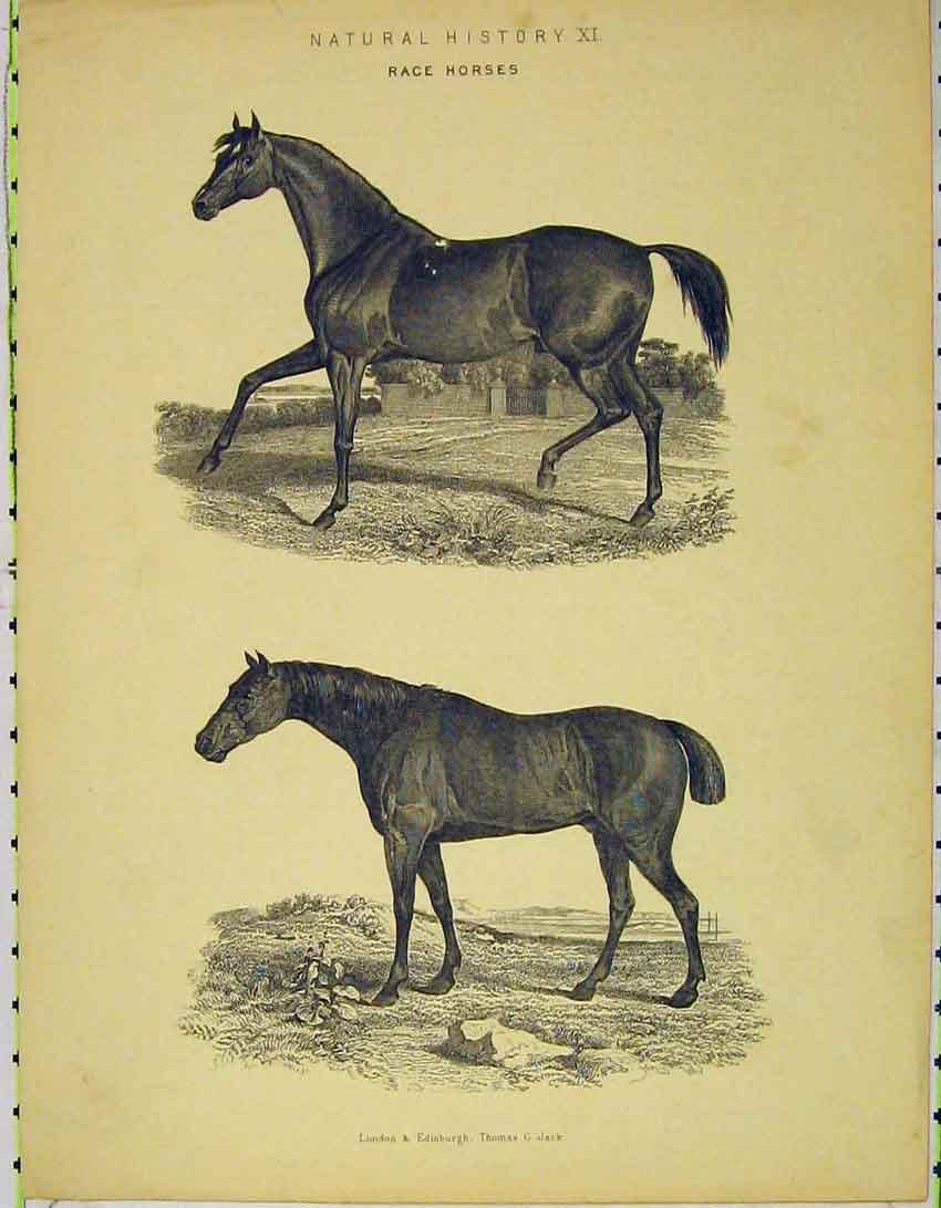 Print C1845 Natural History Race Horses Country 136B324 Old Original