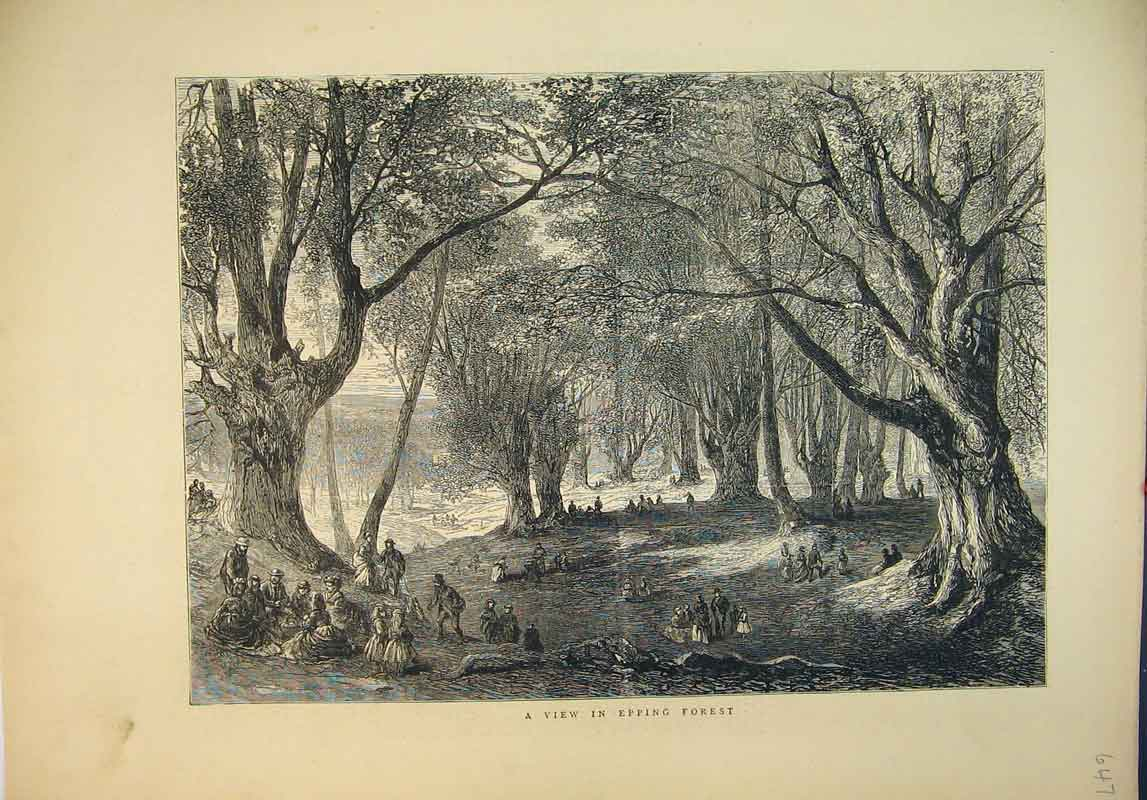 Print 1871 Country Scene View Epping Forest Trees Families 647B345 Old Original