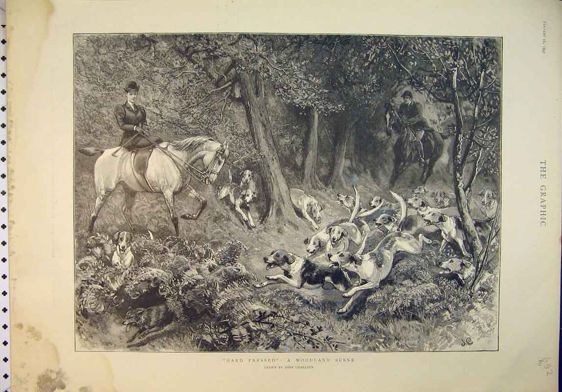 Print 1897 Woodland Scene Fox Hunting Hounds Horses 692B345 Old Original