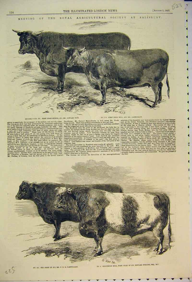 Print Salisbury Show 1857 Heifer Bull Shorthorn Cattle Davy 523B353 Old Original