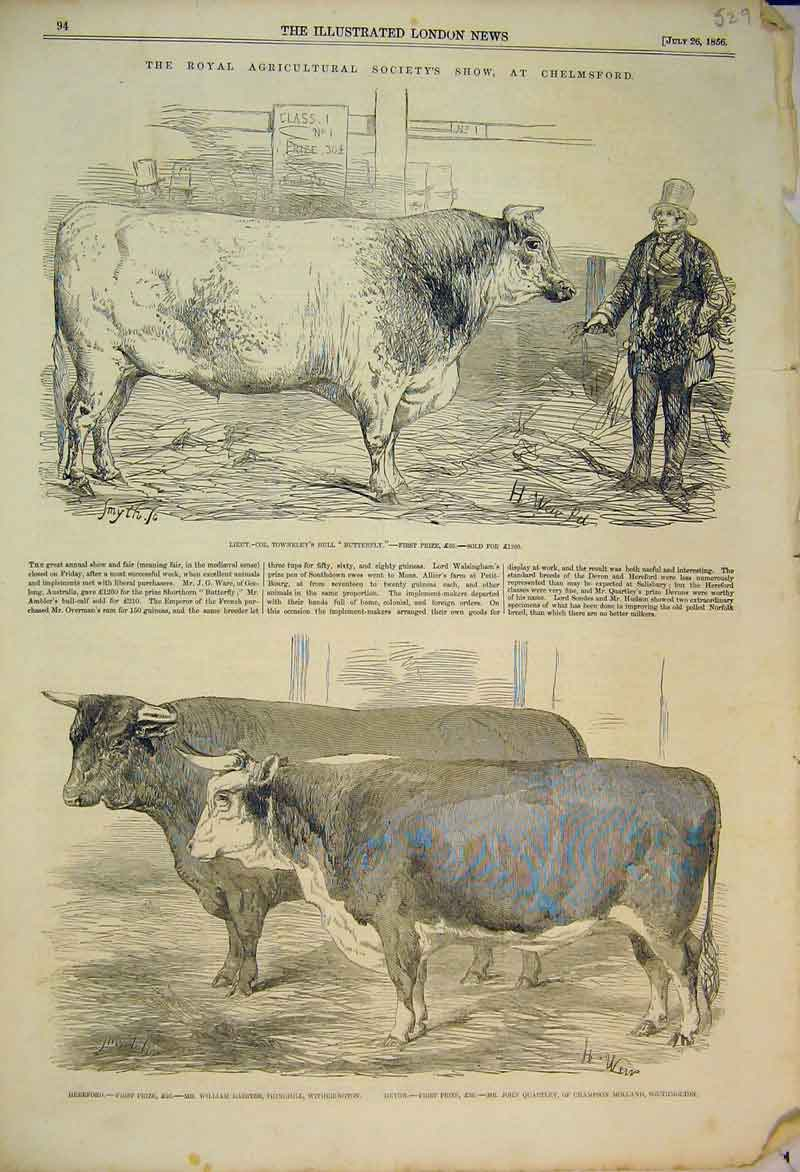Print 1856 Royal Agricultural Show Chelmsford Bull Cattle 529B353 Old Original