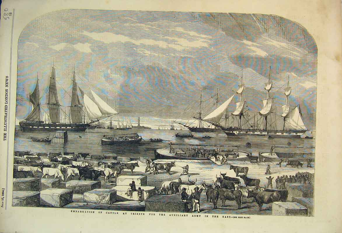 Print 1854 Embarkation Cattle Trieste Auxiliary Army Ship 580B353 Old Original