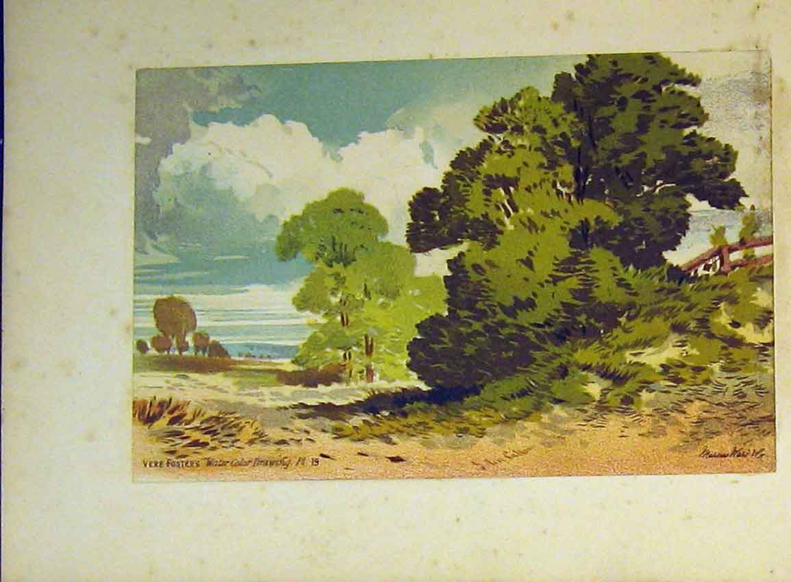 Print C1890 Vere Foster Water Colour Country Trees Callou 609Ab355 Old Original