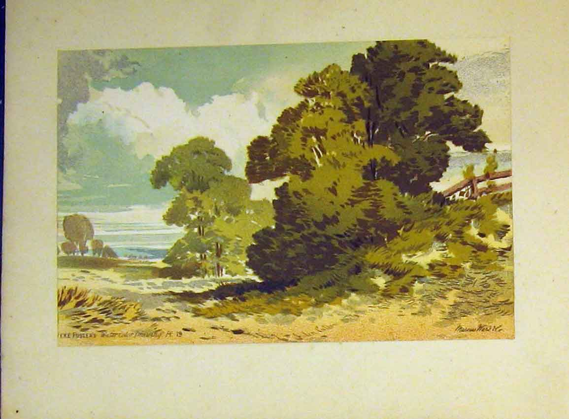 Print Country Scene Trees C1890 Water Colour Vere Foster 613B355 Old Original