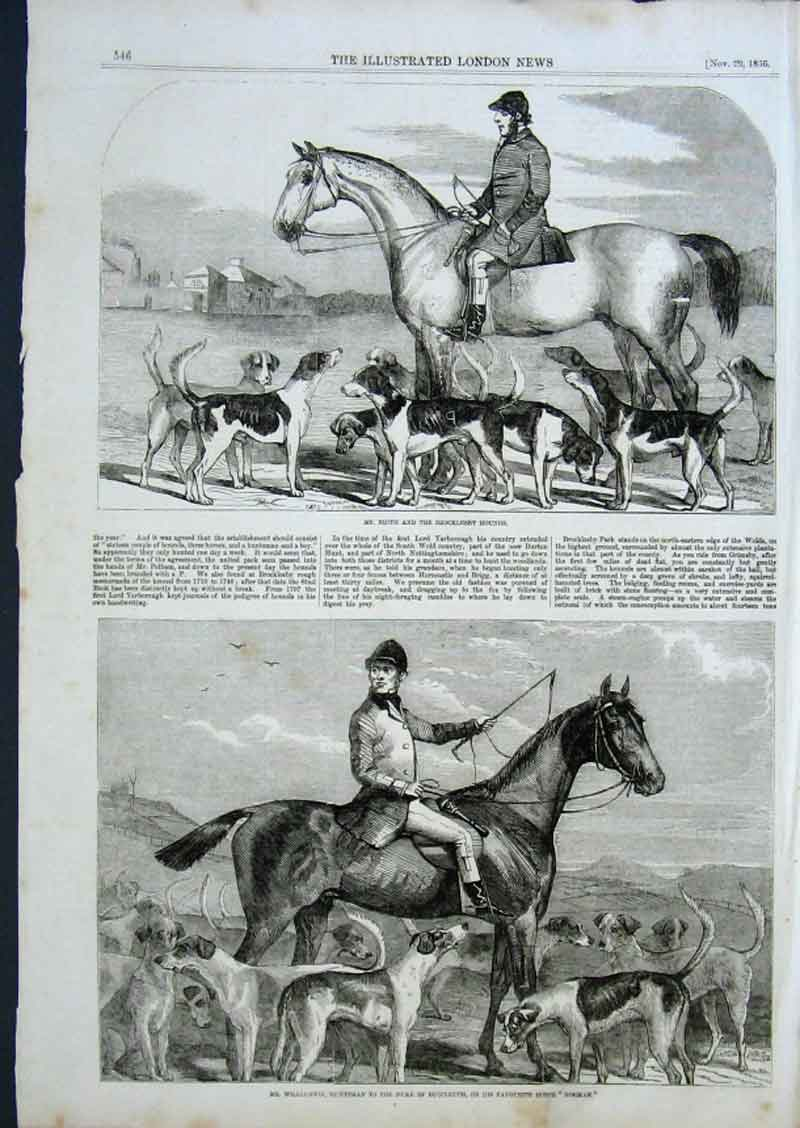 Print Brocklesby Fox Hounds Huntsman On Horse 1856 46Aaa0 Old Original