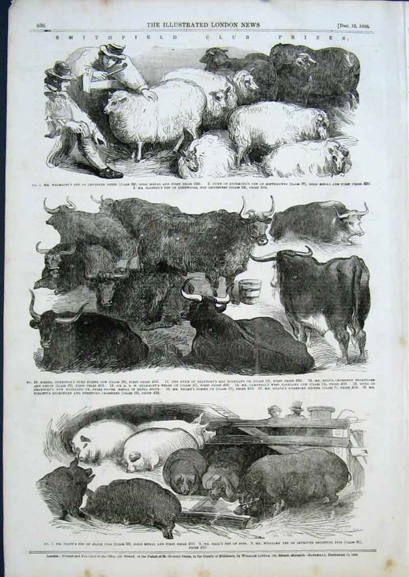 Print Pigs Sheep Cattle Prizewinners Smithfield 1856 06Aaa0 Old Original
