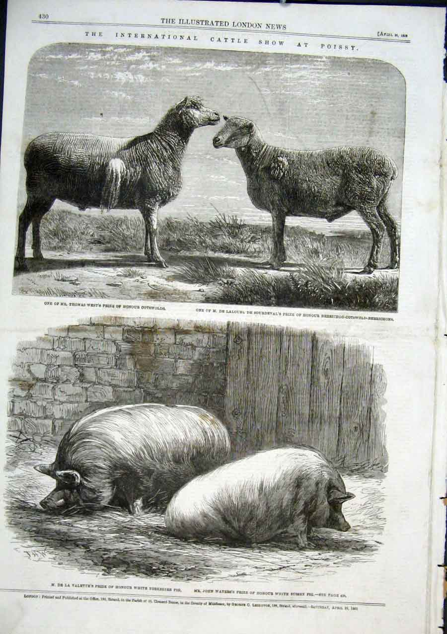 Print Cattle Show At Poissy Prize Sheep & Pigs 1862 30Aaa0 Old Original