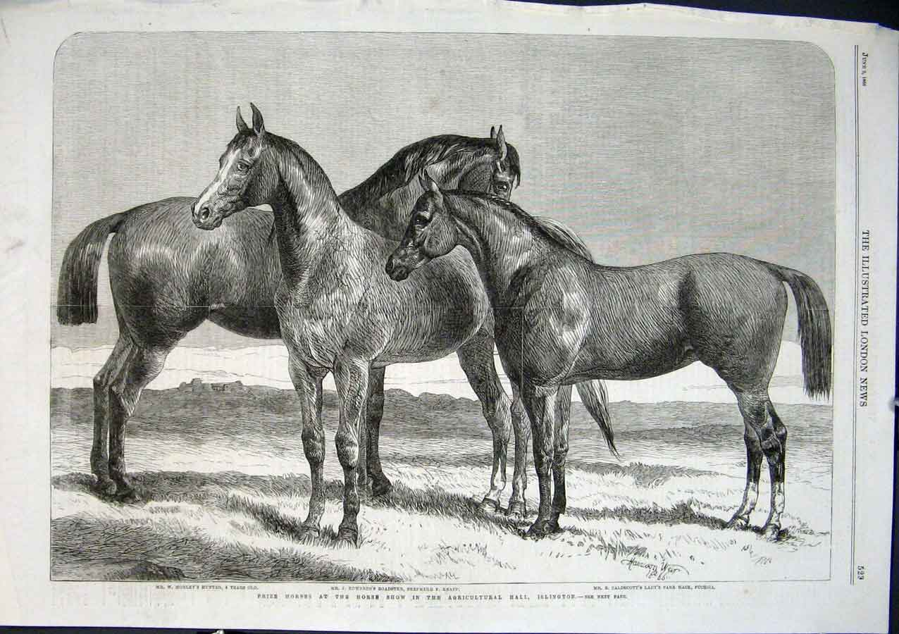 Print Prize Hunters Hacks Roadster Horses At Show 1864 29Aaa0 Old Original