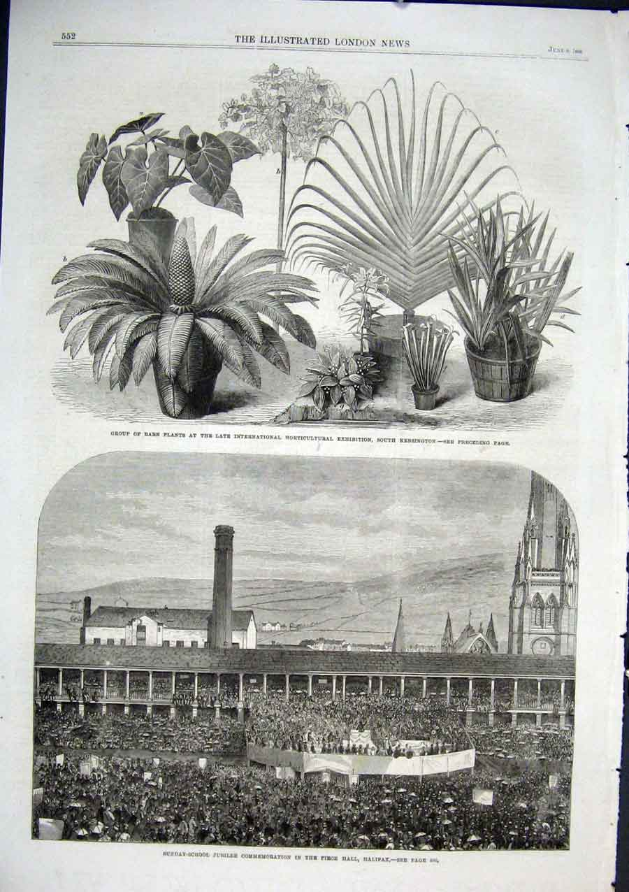 Print Sunday School Piece Hall Halifax 1866 Rare Plants 52Aaa0 Old Original