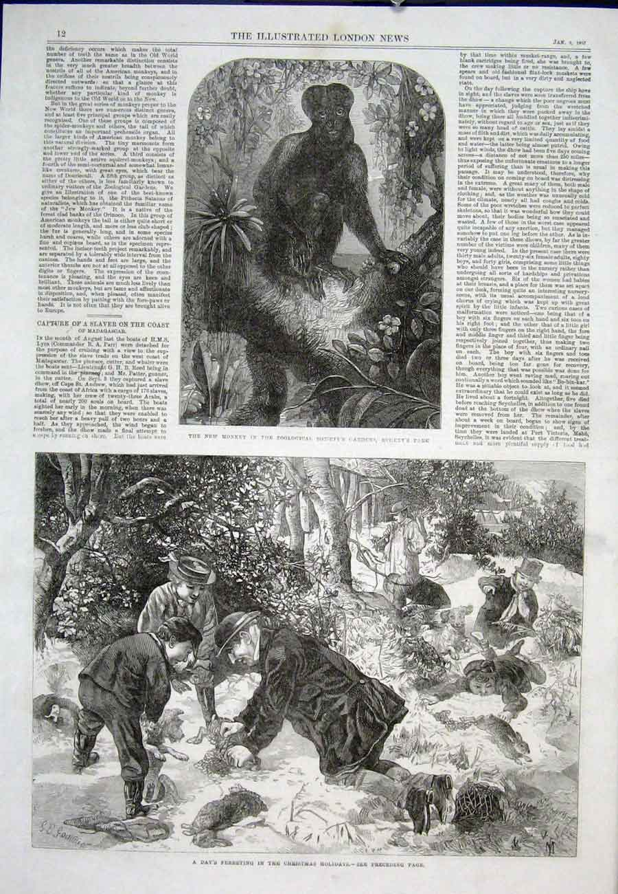 Print Monkey Zoo Regent'S Park Fereting Christmas 1867 12Aaa0 Old Original