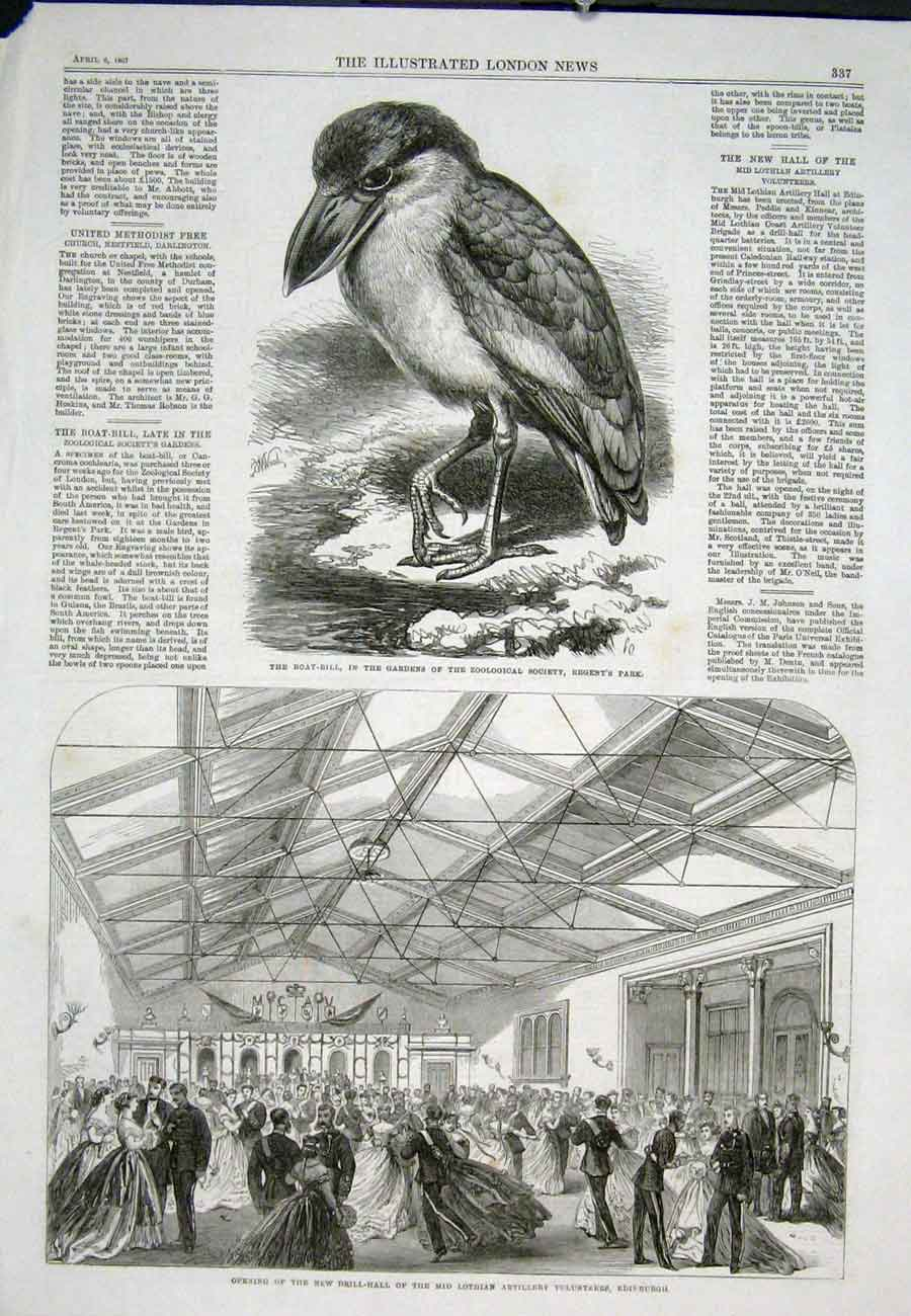 Print Bird Boat-Bill Regents Park Zoo Drill Hall Edinburgh 37Aaa0 Old Original