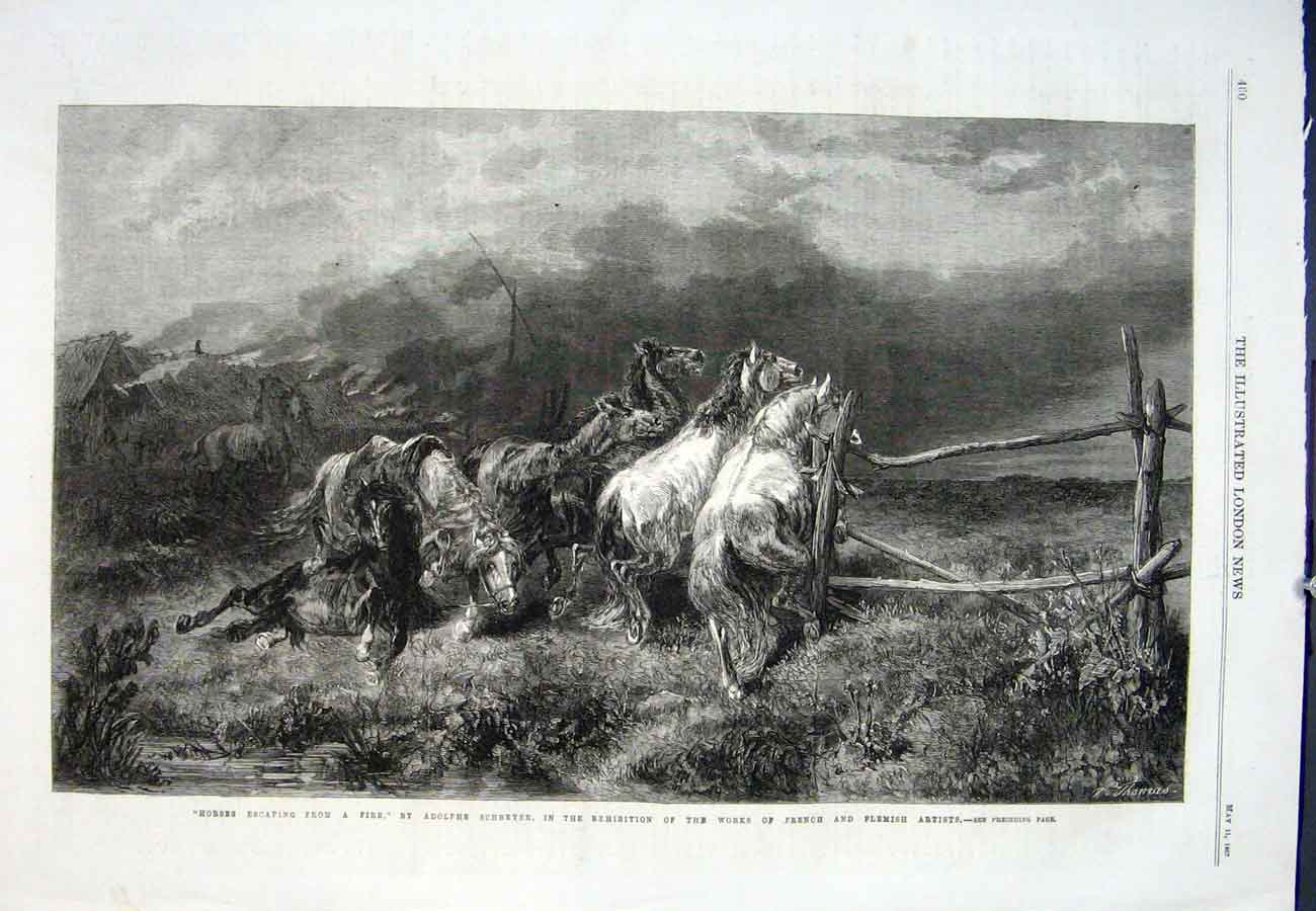 Print Adolphie Shreyer Horse Fire French Flemish Artist 60Aaa0 Old Original