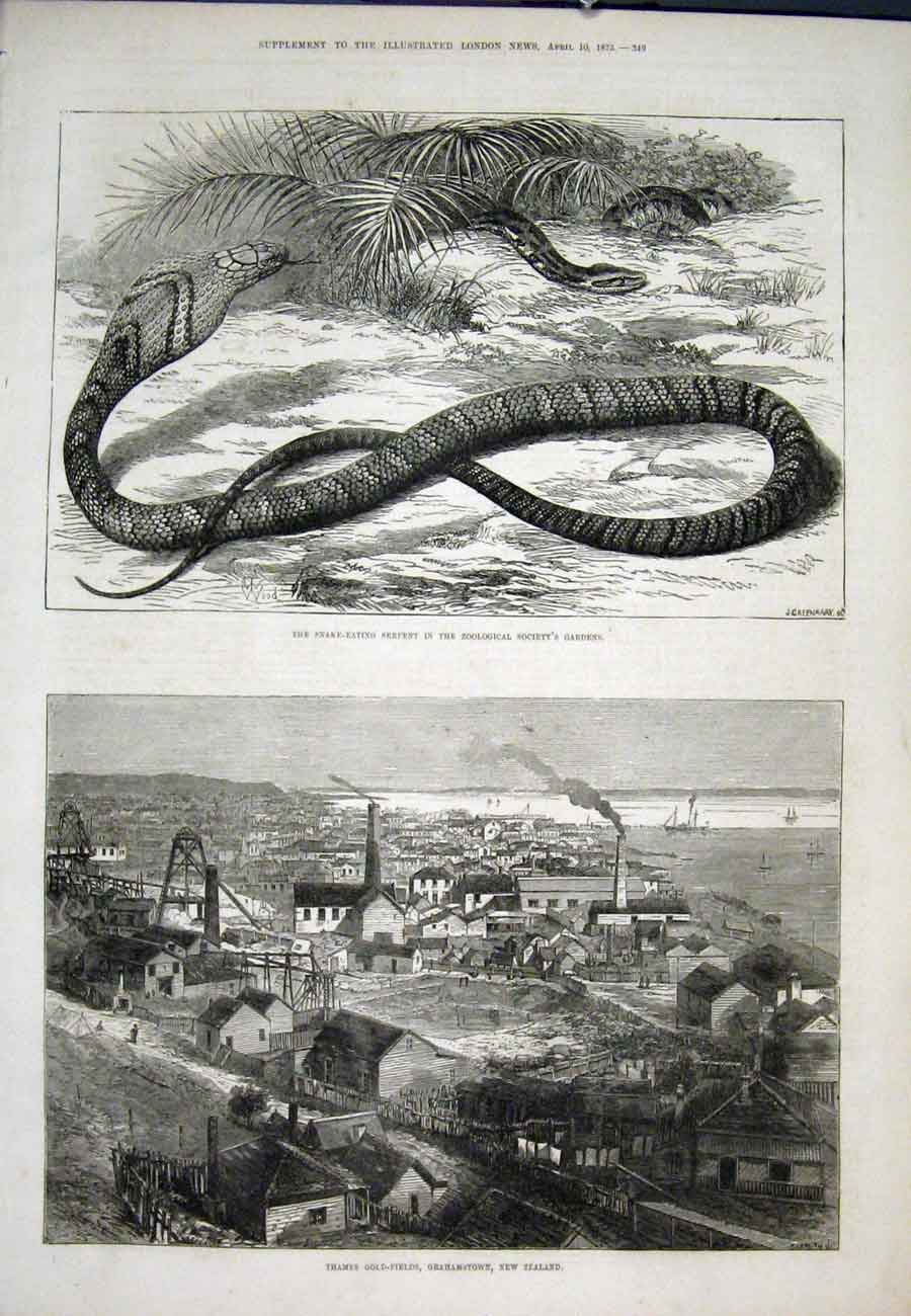 Print Snake Serpent Zoo Thames Ggrahamstown New Zealand 49Aaa0 Old Original