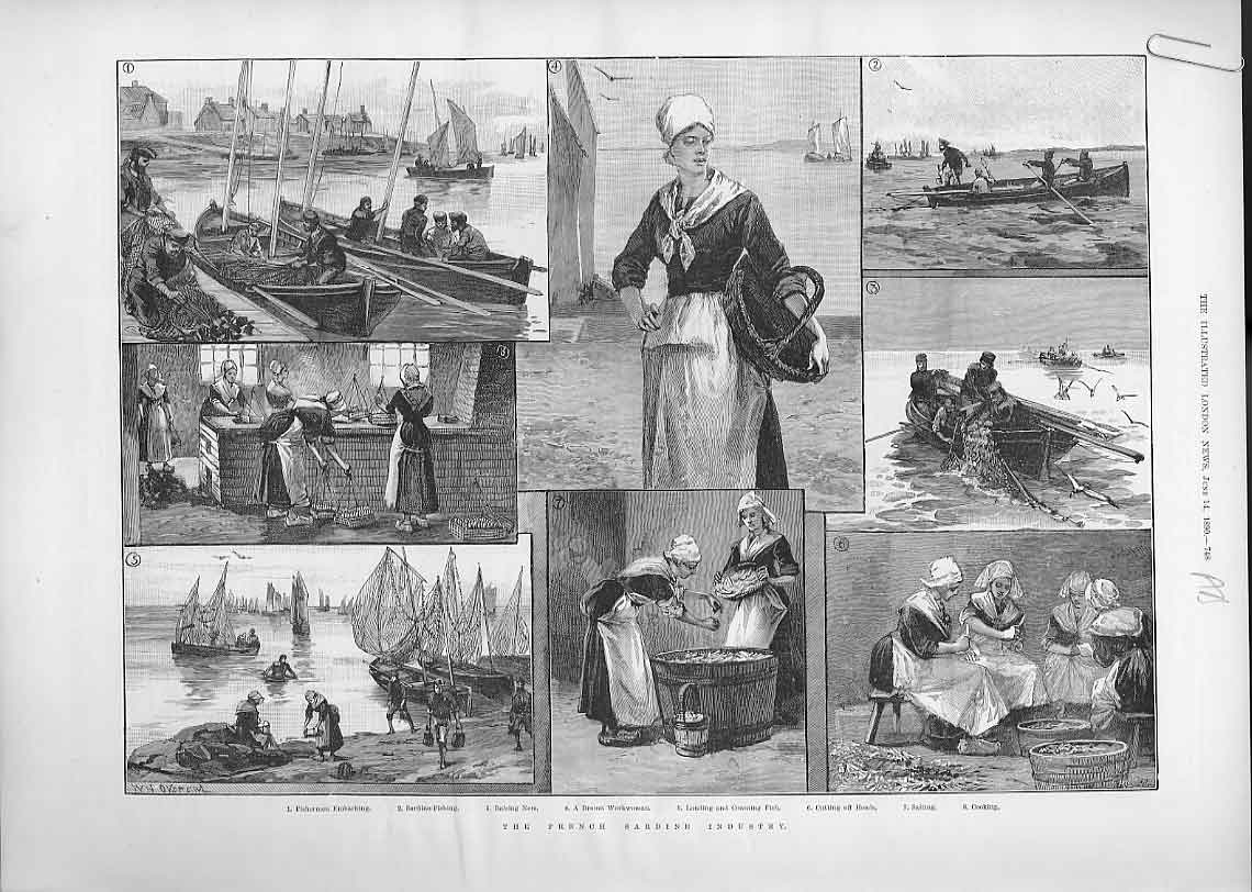 Print The French Sardine Industry 1890 48Aaaa0 Old Original