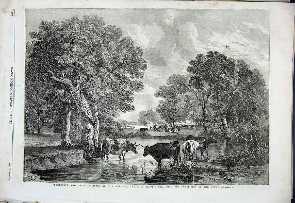 Print Cattle In River By Lee & Cooper Fine Art 1856 31Aaa1 Old Original
