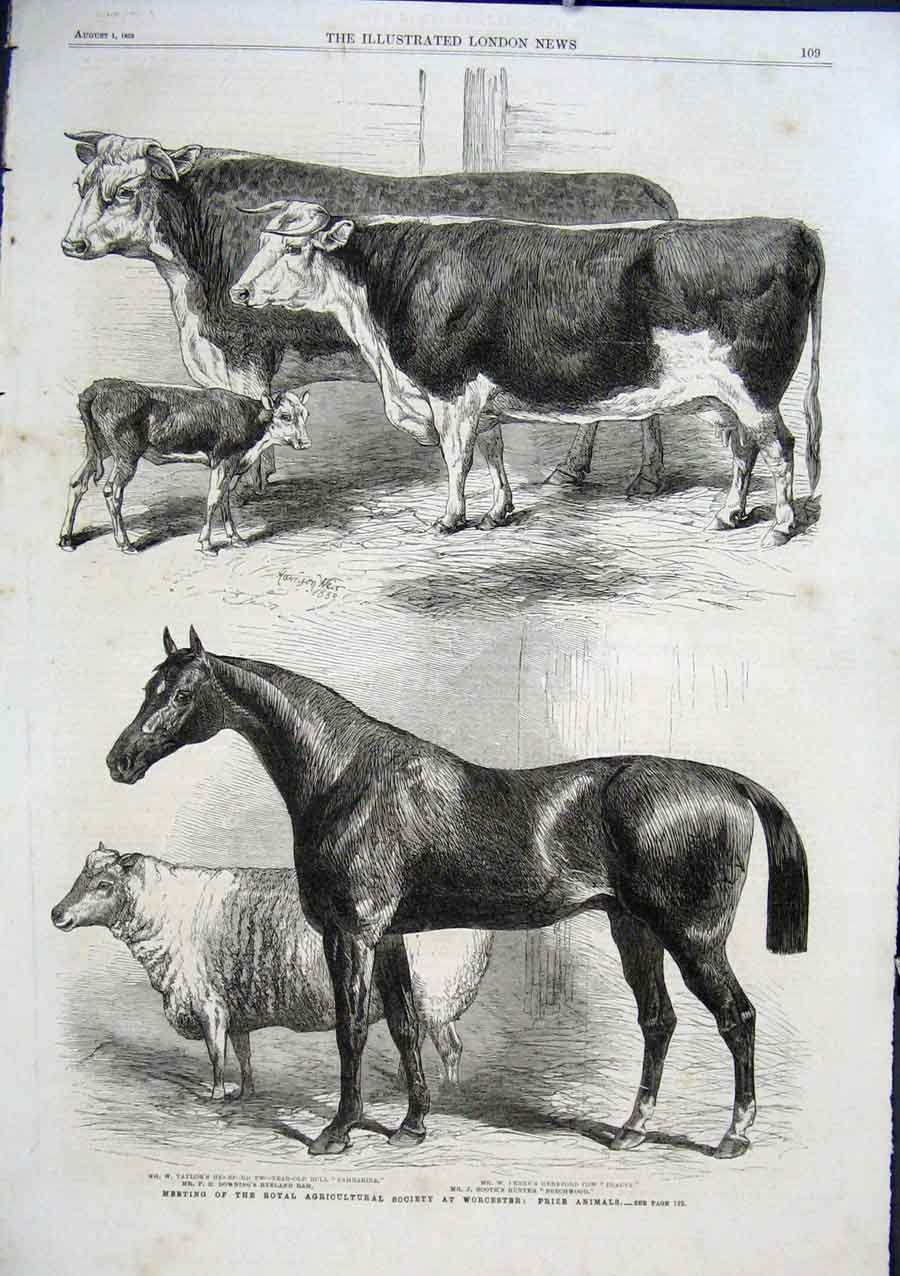 Print Prize Horse & Cows Worcester Show 1863 09Aaa1 Old Original