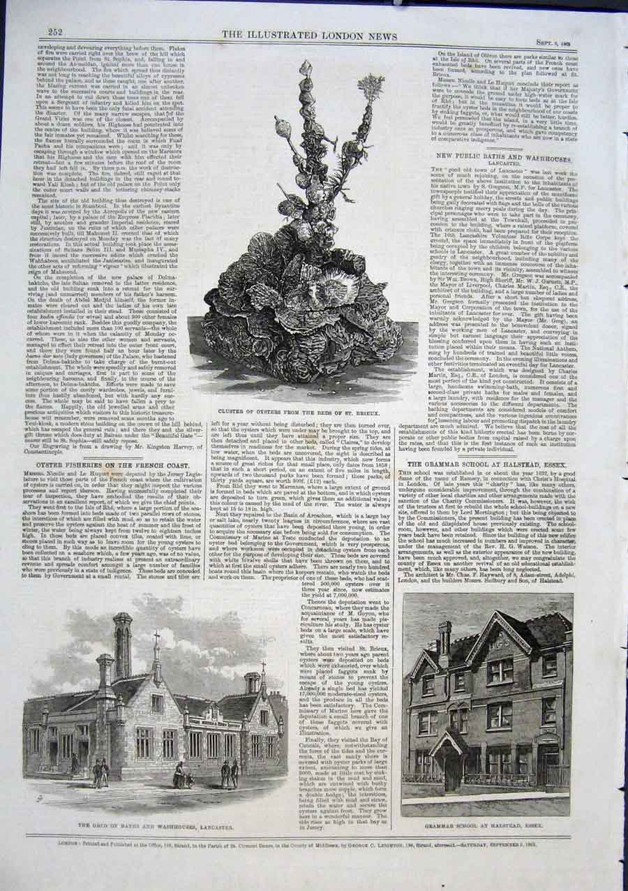 Print Oysters From St Brieux School Halsrtead Essex 1863 52Aaa1 Old Original
