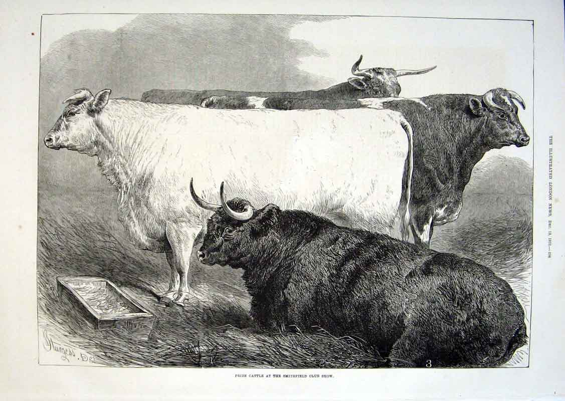 Print Prize Cattle Smithfield Show 1875 96Aaa1 Old Original