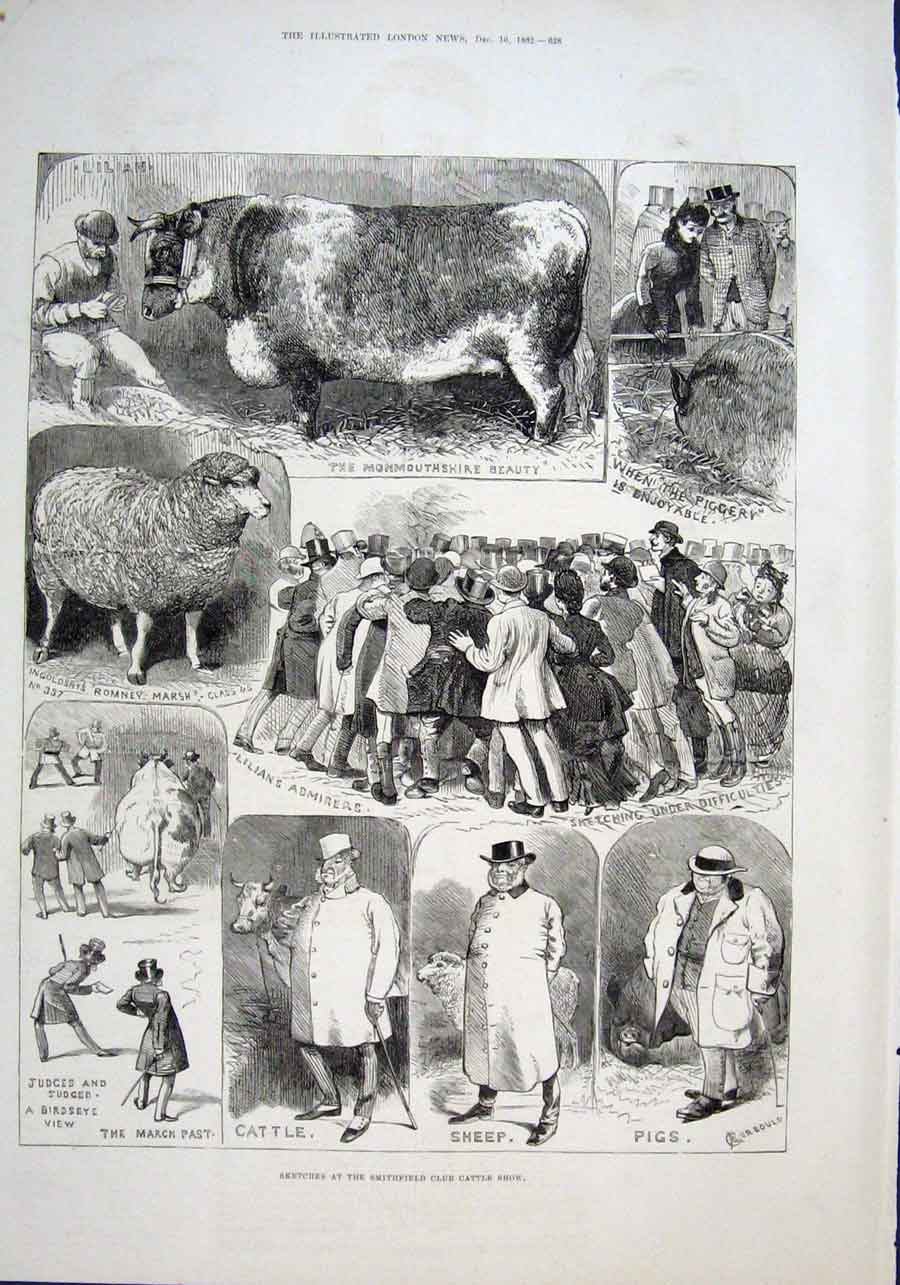 Print Fat Cow & Sheep Fun Smithfield Cattle Show 1882 28Aaa1 Old Original