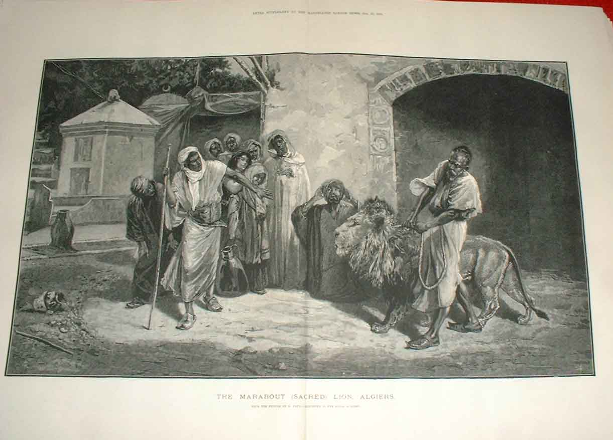Print The Marabout Sacred Lion Algiers 1883 05Taaa1 Old Original