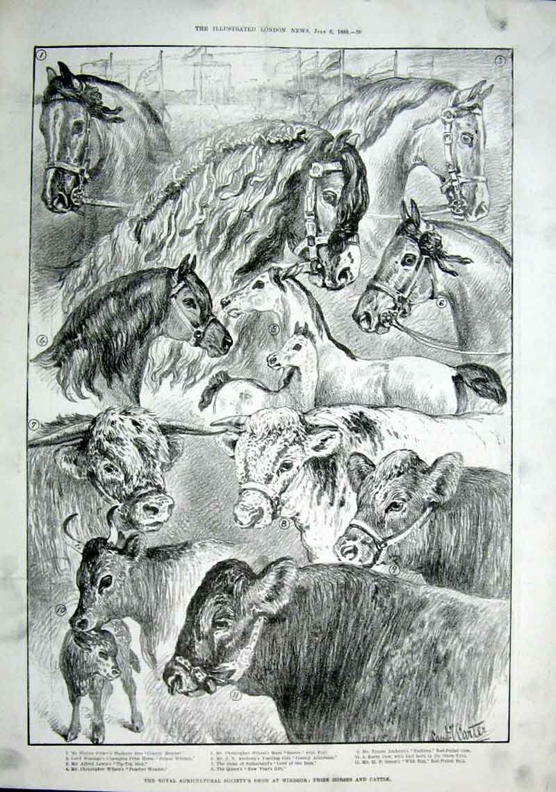 Print Prize Horses & Cattle Witwatersrand Gfield S Afric 26Aaa1 Old Original