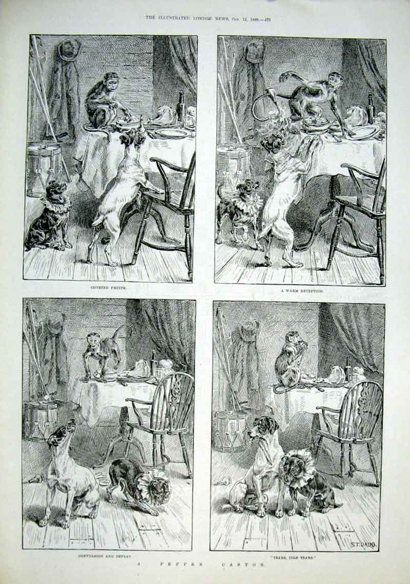 Print 2 Dogs A Monkey & A Pepper Castor 1889 73Aaa1 Old Original