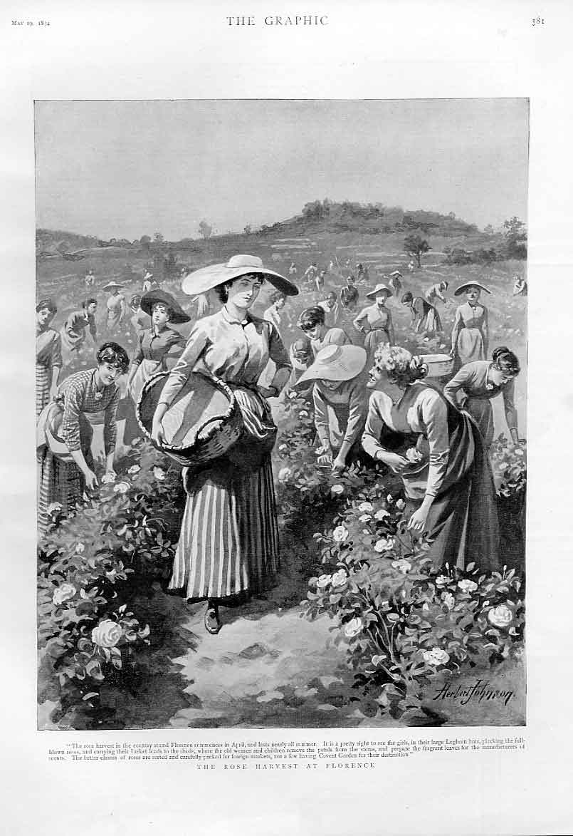 Print Rose Harvest At Florence 1894 Italy 81Bbb0 Old Original