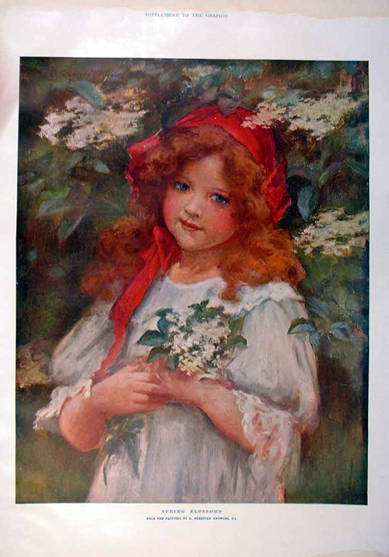 Print Spring Blossoms Fine Art Knowles 1905 Colour 50Bbb0 Old Original