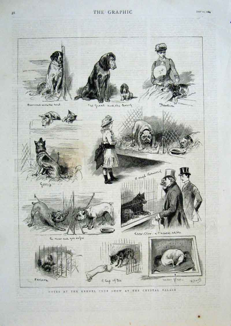 [Print Kennel Club Show Crystal Palace 1884 Dogs 36Bbb1 Old Original]