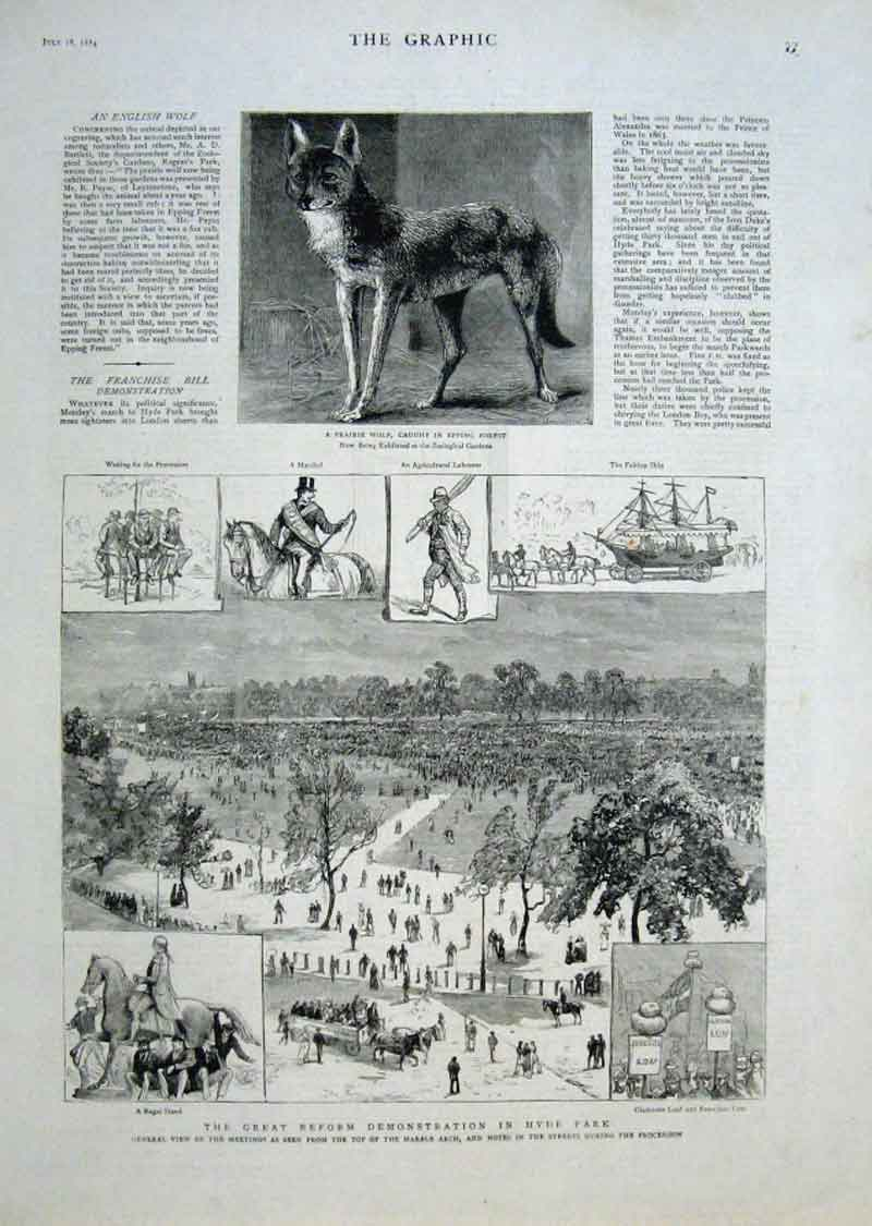 Print Prairie Wolf Epping Fores Reform Demo Hyde Park 1884 77Bbb1 Old Original