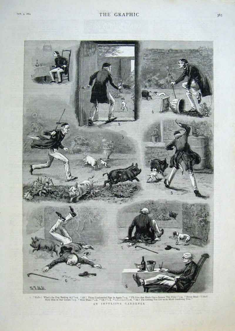 Print An Implusive Gardener 1884 Pigs Away 65Bbb1 Old Original